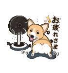 気軽にスタンプ コーギー 夏季編(個別スタンプ:17)