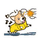 気軽にスタンプ コーギー 夏季編(個別スタンプ:40)