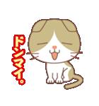 いろいろ猫の応援スタンプ(個別スタンプ:03)