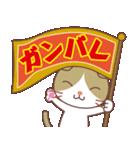 いろいろ猫の応援スタンプ(個別スタンプ:05)