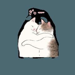 キジトビ(日本猫)