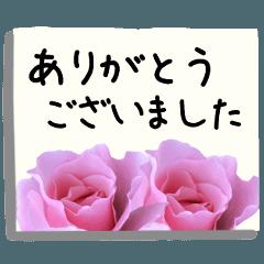 バラの花の付箋(敬語・ビジネス)
