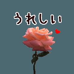 ▶動く バラとメッセージの癒しスタンプ