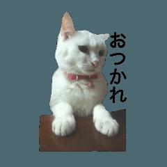 [LINEスタンプ] ちぃちゃん☆