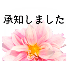 暮らしに花を♪ ダリア(敬語)