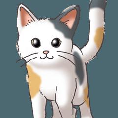 猫図鑑 三毛猫