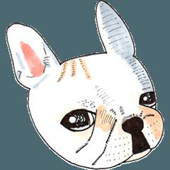子犬のフレブルお嬢ちゃん