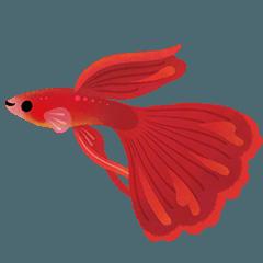 幸せな熱帯魚