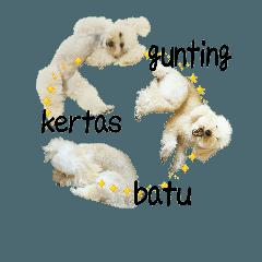 おうちプードル、マレー語でジャン犬ポン