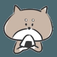 柴犬のコロ