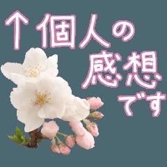 手書きの丁寧な言葉に桜の花を添えて
