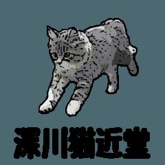 深川猫近堂 ほっこり猫ライフ
