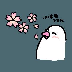 だいふく文鳥_春