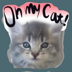猫トーク!! 猫写真 日本語,敬語,英語