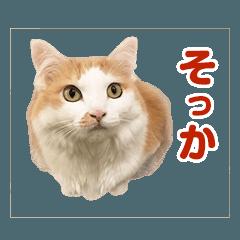 都会のオアシス~スナック三毛猫~
