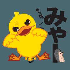 学童ひよこ「やっぱちゃん」3