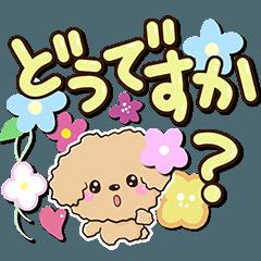 トイプードル【アプリコット 手書き文字】