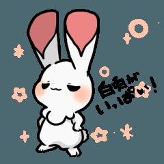 黒兎と白兎 -白兎がいっぱい!-