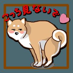 柴犬の日常(よく使う言葉)