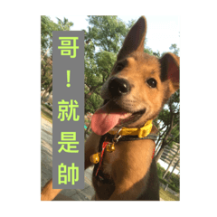 [LINEスタンプ] I am funny dog (1)