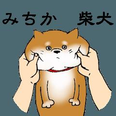 【みちか】の柴犬