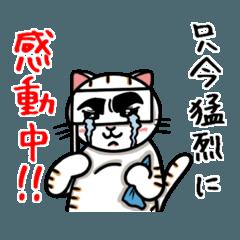 ちゃしろぶさへたねこ茶輔(さすけ)2