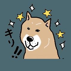 Japanese dog40