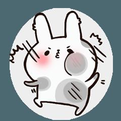 ウサギの日常生活