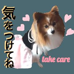 【マルちゃんブラザース】ヒナちゃんseries