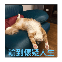 handsome cat vol2