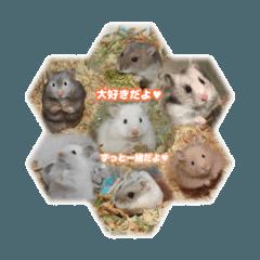 4姫3王子+1