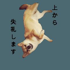SHIBAINUTETSUKO