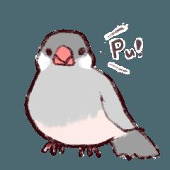 シルバー文鳥のすたんぷす