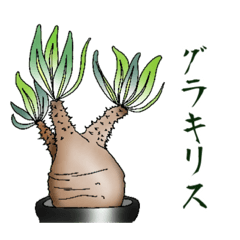 多肉植物のある暮らし