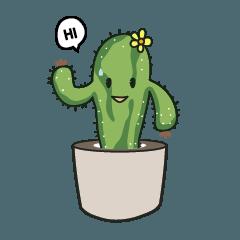 Cactus tus1