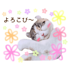 Pet's pastel sticker