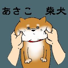 【あさこ】の柴犬