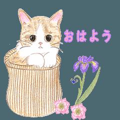 甘くてかわいい猫たち