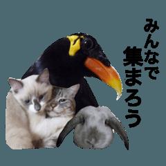 レオララ★ハイジ★九ちゃんde日常会話