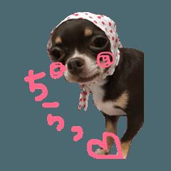 【春夏秋冬ワンコたち】niko&nana