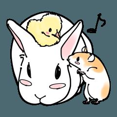 白ウサギと小動物たち