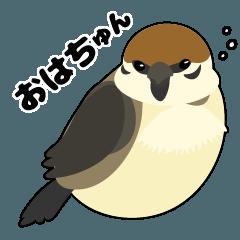 ぽちゃスズメのちゅんスタンプ