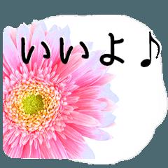 暮らしに花を♪ ガーベラ Part2