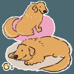 Every Day Dog Golden Retriever2
