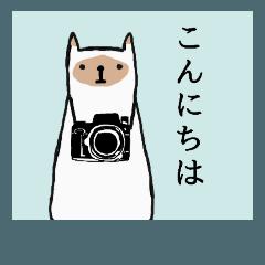 ツンデレ猫の彼女【シャム猫】