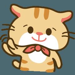 Bunny Cat - ToTo