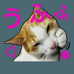 美猫のさくらちゃん♡