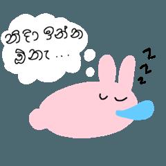 シンハラ語で話すうさぎ
