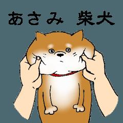 【あさみ】の柴犬