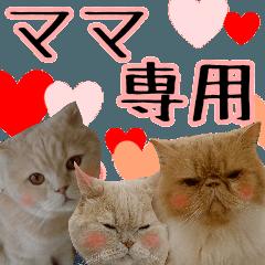 『ママ専用』【ネコ写真】ネコパラダイス